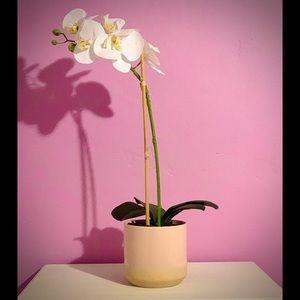 White Orchid Decor Plant💐